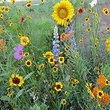 Outsidepride Pollinator Wildflower Seed - 5 LBS