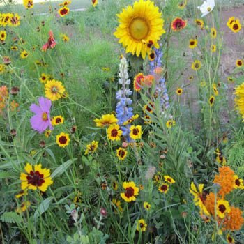 Outsidepride Pollinator Wildflower Seed - 5 LBS by Outsidepride (Image #1)