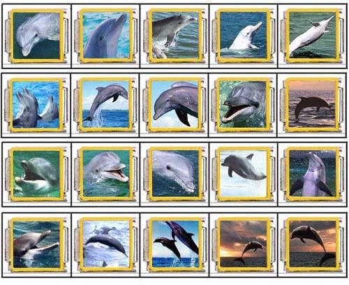 FidgetGear Jumping Dolphin Stainless Steel Italian Charms Links Starter Bracelet Chain K172 ()