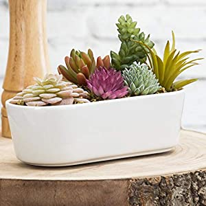 MyGift Assorted Faux Potted Succulents in Modern White Ceramic Pot 48