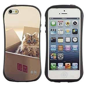 Exotic-Star Hybrid Heavy Duty Shockproof iFace Fundas Cover Cubre Case para Apple iPhone 5 / 5S ( Lindo gato en una caja )