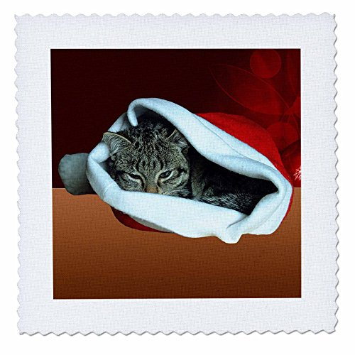 3dRose Sandy Mertens Christmas Animals - Gray Striped Kitten in Santa Hat with Red Christmas Ornament Background - 16x16 inch quilt square (qs_269540_6) by 3dRose