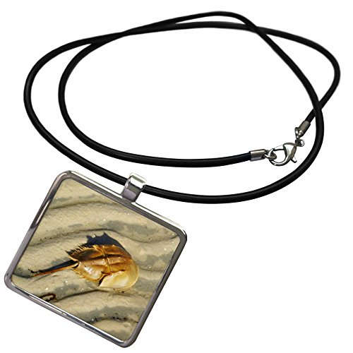 3dRose Florene Nature and Animals - Tan Horseshoe Crab On Beach - Necklace with Rectangle Pendant (ncl_35257_1) (Horseshoe Crab Necklace)
