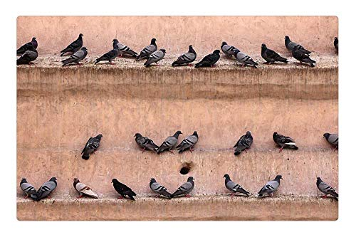 Tree26 Indoor Floor Rug/Mat (23.6 x 15.7 Inch) - Pigeons Wall Gathered Bird Lines Castle Fortress