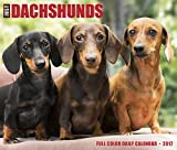 Great Value Just Dachshunds Daily Desktop Box Calendar Dogs 2017 {jg} Great Holiday Gift Ideas - for mom, dad, sister, brother, grandparents, gay, lgbtq, grandchildren, grandma.