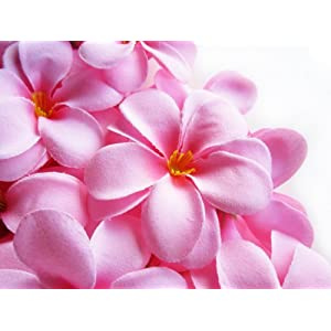 "(12) Pink Hawaiian Plumeria Frangipani Silk Flower Heads - 3"" - Artificial Flowers Head Fabric Floral Supplies Wholesale Lot for Wedding Flowers Accessories Make Bridal Hair Clips Headbands Dress 64"