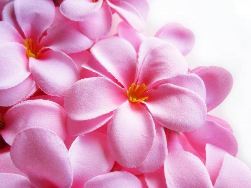 Amazon 12 pink hawaiian plumeria frangipani silk flower heads amazon 12 pink hawaiian plumeria frangipani silk flower heads 3 artificial flowers head fabric floral supplies wholesale lot for wedding flowers mightylinksfo