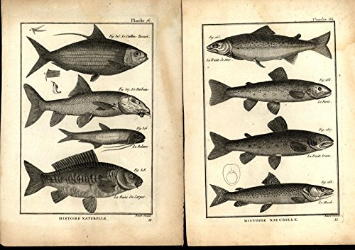 - Fish Ichthyology c.1750-80's 18th century lot of 8 nice old prints