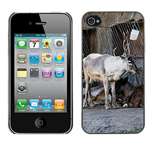 Bild Hart Handy Schwarz Schutz Case Cover Schale Etui // M00134130 Reindeer Standgehäuse Tier // Apple iPhone 4 4S 4G