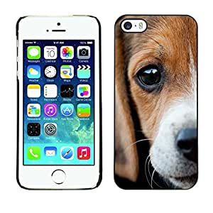 Be Good Phone Accessory // Dura Cáscara cubierta Protectora Caso Carcasa Funda de Protección para Apple Iphone 5 / 5S // Beagle Eyes Sad Cute Puppy Pet