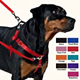 Freedom No-Pull Dog Harness Training Package with Leash, Orange Large, My Pet Supplies