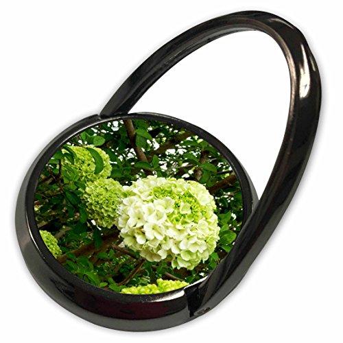 3dRose Dawn Gagnon Photography Flowering Trees - Hydrangea Tree, Soft green Hydrangea pom poms highlight the beauty of this Hydrangea tree - Phone Ring (phr_127578_1) Beauty Hydrangea