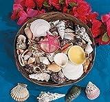 "12"" Basket Of Assorted Seashells - Bulk"