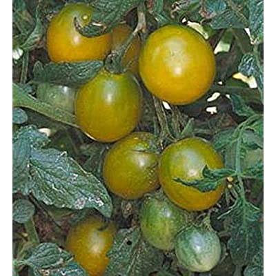 Green Grape Tomato Seeds : Garden & Outdoor