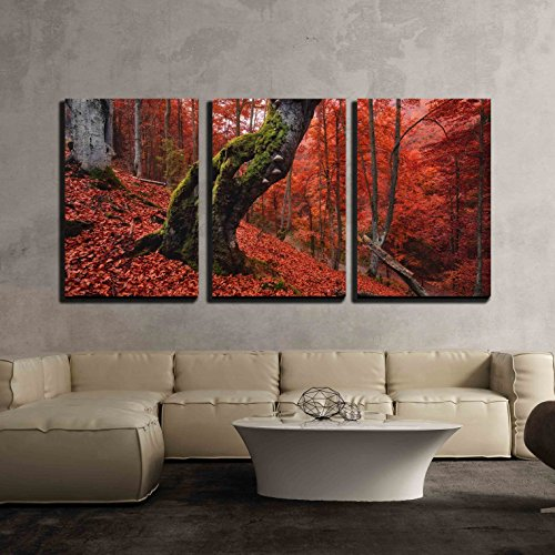 wall26 - 3 Piece Canvas Wall Art - Autumn Forest in the Mountains with Old Mosscovered Lonely Tree - Modern Home Decor Stretched and Framed Ready to Hang - 24