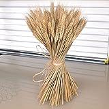 Natural dried wheat sheaves