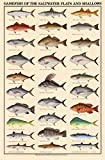 Game Fish of the Saltwater Flats and Shallows Art Poster Print, 24x36 Art Poster Print, 24x36