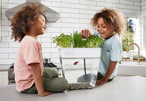 Back to the Roots Water Garden Betta Fish Tank, 3 Gallon. Hydroponics Growing System. Fish tank with Organic Aquaponic Sprouts and Herbs Aquarium Starter Kit. Great for Kids by Back to the Roots (Image #2)