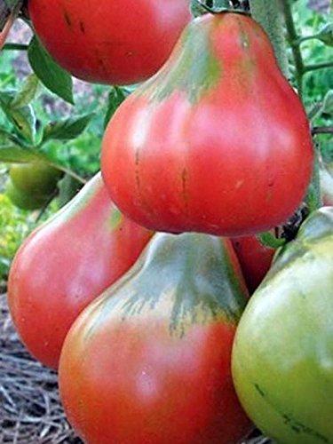 Organic Vegetable Heirloom Tomato Seeds