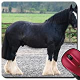 pedestal horse - Liili Suqare Mousepad 8x8 Inch Mouse Pads/Mat A black Shire horse stands still in an arena Image ID 22988816
