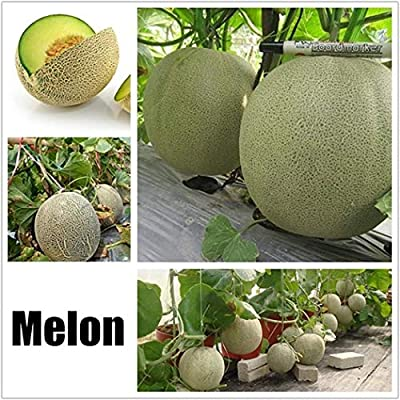 Caiuet Various Fruits Seed Perennial Temperate Garden Home Indoor Fruit Bonsai Fruit Tree Seed Planting