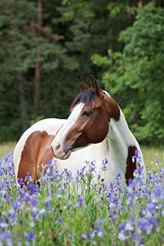 Cheapest Stable Nutrition Probiotics for Horses 30 Day Check this out