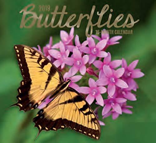 Butterfly Calendar - 16 Month Wall Calendar 2019: Butterflies - Each Month Displays Full-Color Photograph. September 2018 to December 2019 Planning Calendar