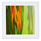 3dRose Danita Delimont - Abstracts - Rainbow Eucalyptus bark, Island of Kauai, Hawaii, Usa - 16x16 inch quilt square (qs_259227_6)