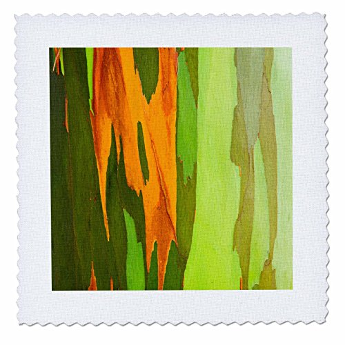 3dRose Danita Delimont - Abstracts - Rainbow Eucalyptus bark, Island of Kauai, Hawaii, Usa - 16x16 inch quilt square (qs_259227_6) by 3dRose
