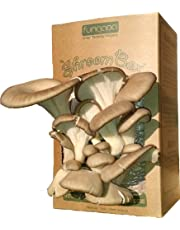 "Fungaea Oyster Mushroom ""Shroom Box"" - Grow Fresh Gourmet Mushrooms At Home In as Little As 10 Days"