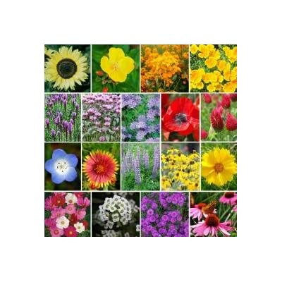 4400 Pollinator Attracting Wildflower Seeds to Attract Bees, Butterflies, and Other Beneficial Insects : Garden & Outdoor