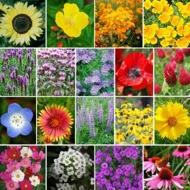 4400 Pollinator Attracting Wildflower Seeds to Attract Bees, Butterflies, and Other Beneficial Insects (Best Flowers To Attract Honey Bees)