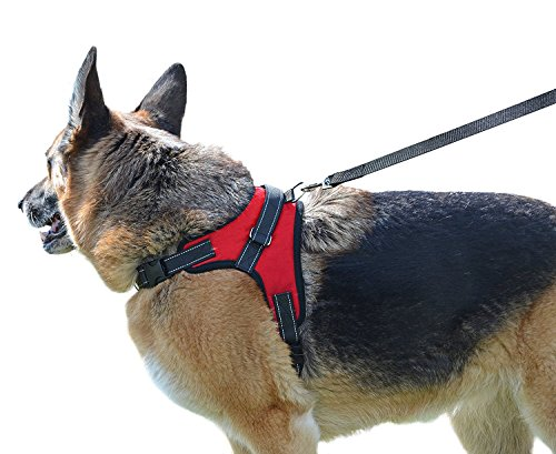 Dog Leash Harness, iNNEXT Adjustable & Durable Leash Set & Heavy Duty Denim Dog Leash Collar for Small and Large Dog, Perfect for Daily Training Walking Running, Best for Large Medium Small Dog