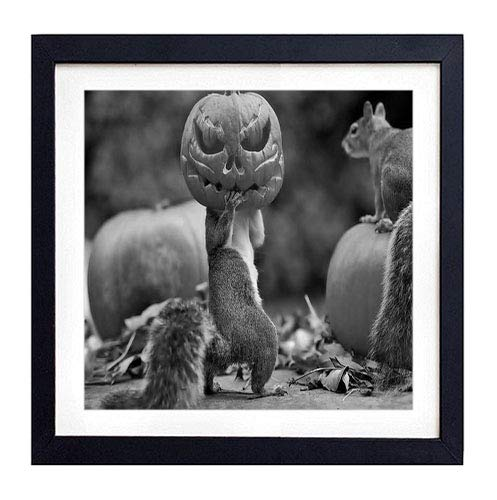 GLITZFAS PRINTS Framed Wall Art - Halloween Squirrels Pumpkin mask - Art Print Black Wood Framed Wall Art Picture for Home Decoration - 18