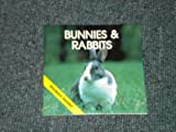 img - for Bunnies & Rabbits (Animal Information Series) book / textbook / text book