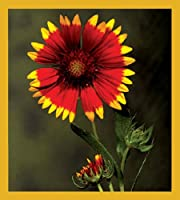 Gift Trenz Indian Blanket Flower Magnetic Bookmark