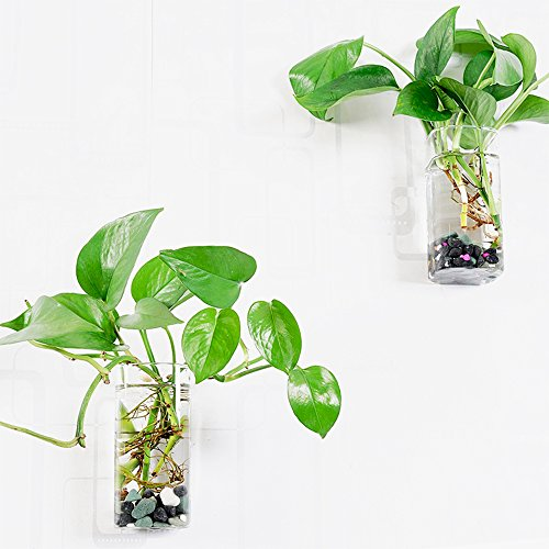 Vase Wall Glass (Set of 2 Wall Mounted Clear Glass Terrariums Hanging Flower Vase Square Tube Air Plant Jar)