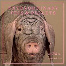 extraordinary pigs piglets 2013 wall calendar