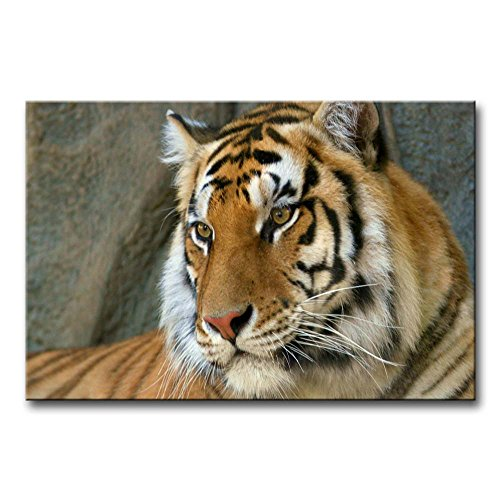 So Crazy Art - Canvas Print Wall Art Painting For Home Decor,Bengal Tiger Paintings Modern Giclee Stretched And Framed Artwork Oil The Picture For Living Room Decoration,Animal Pictures Photo Prints On Canvas (Bengal Tiger Framed)