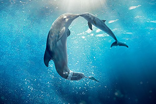 dolphin tale 2 movie - 9