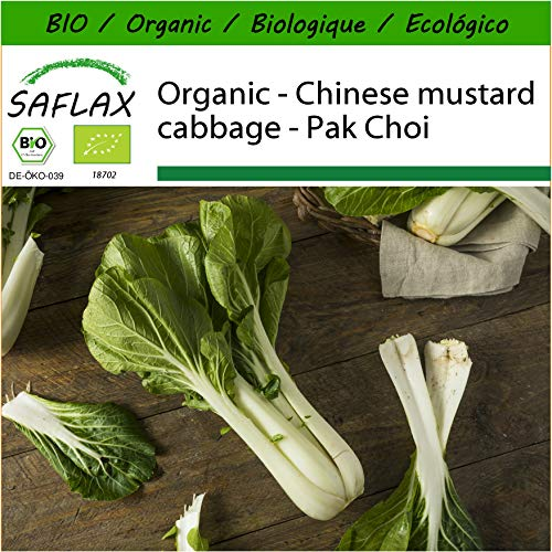SAFLAX - Organic - Chinese Mustard Cabbage - Pak Choi - 300 Seeds - with Potting Substrate for Better Cultivation - Brassica rapa