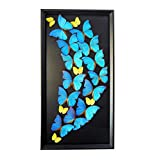 Real Blue Butterfly Large Artwork Modern Home Décor - Butterfly Taxidermy, Butterfly Shadow Box, Butterfly Display