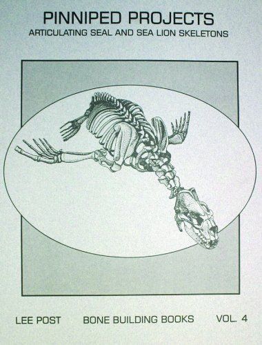 Pinniped Projects: Articulating Seal and Sea Lion Skeletons