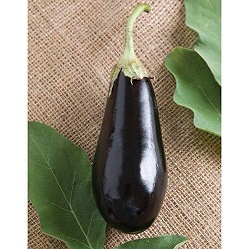 Traviata Organic (F1) Eggplant Seeds - Italian eggplant with high yields !!!(10 - Seeds)