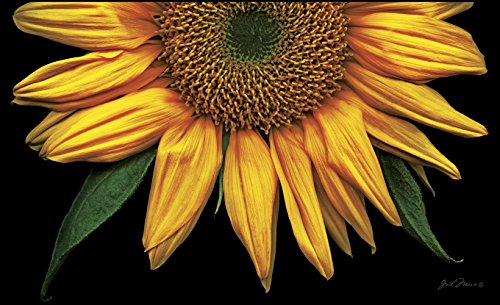 Toland Home Garden Sunflowers On Black 18 X 30 Inch Decorative USA Produced  Standard