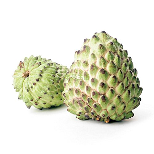Annona Squamosa Sugar - Futaba® Sugar-apple Sweetsop Annona squamosa Non GMO fruit 10 Seeds