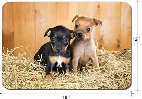 Liili Large Mouse Pad XL Extended Non-Slip Rubber Extra Large Gaming Mousepad, 3mm thick Desk Mat 18x12 Inch IMAGE ID: 21817422 Two Russian Toy Terrier puppies on a straw on (Best Liili Nature Boas)