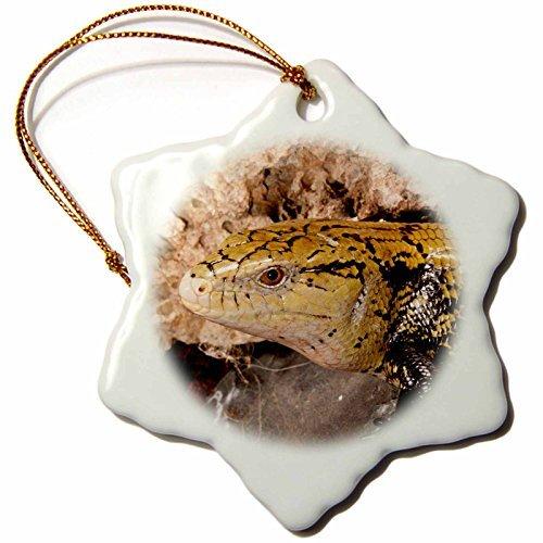 Angel Ornaments Danita Delimont - Lizards - Irian Jaya Blue Tongue Skink, Lizard, Irian Jaya - NA DNO - David Northcott - inch Snowflake Porcelain (Spirit Halloween Utah)