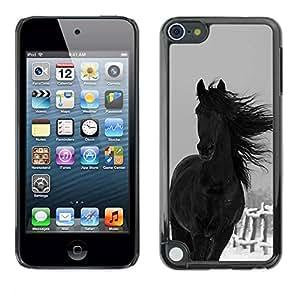TopCaseStore / la caja del caucho duro de la cubierta de protección de la piel - Farm Horse Black Stallion - Apple iPod Touch 5