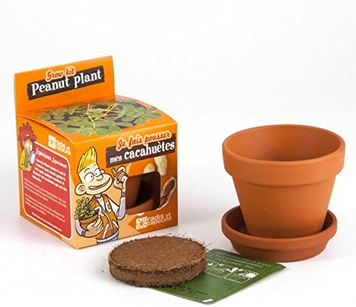 Semillas de cacahuetes en maceta de cultura para niños: Amazon.es ...